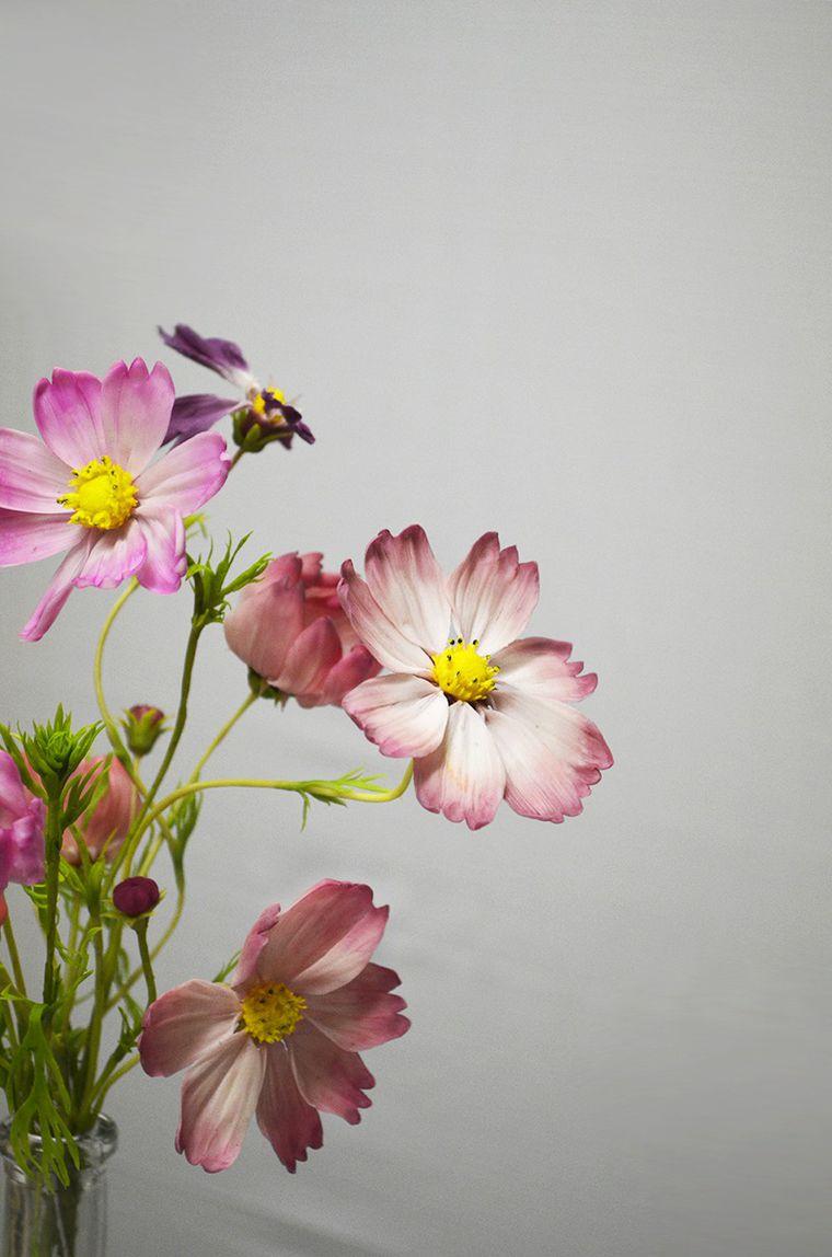 мастер класс, мастер-класс в жуковском, цветы из полимерной глины, космея