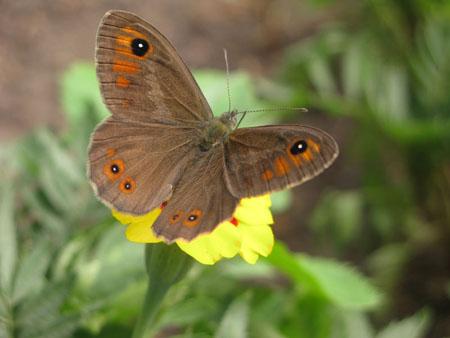 бабочка, фотография