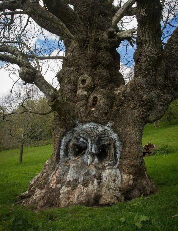 Earth Pictures @EARTH_PlCTURES   Amazing owl carved on a tree