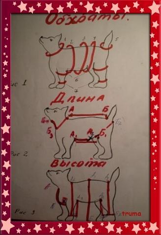 замеры собак, мерки одежды для собак, мк по замерам собак