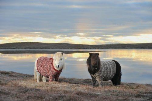 А пони - тоже кони!, фото № 7