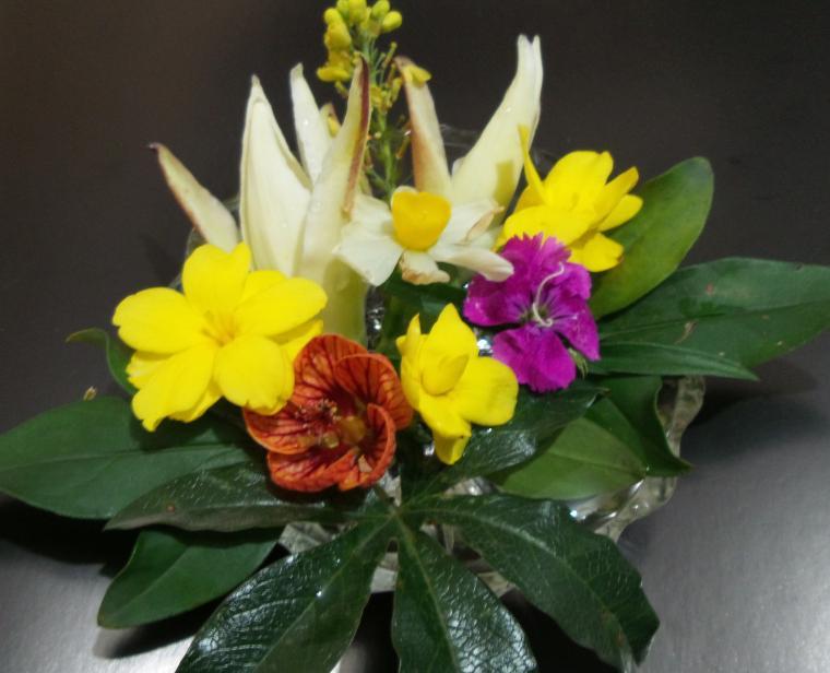 цветы в январе