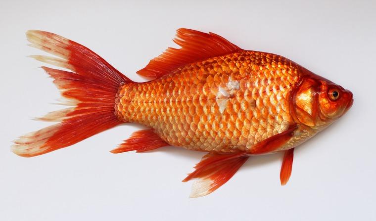 что подарить мужчине, рыба подушка, рыбалка