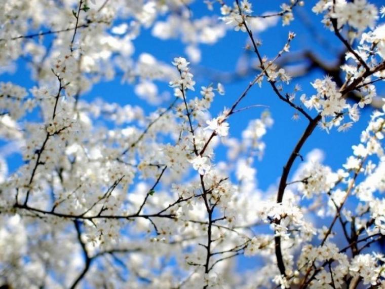 Приближаются майские праздники: 1 мая - праздник весны и труда и в этот же день светлый праздник пасхи, 9 мая