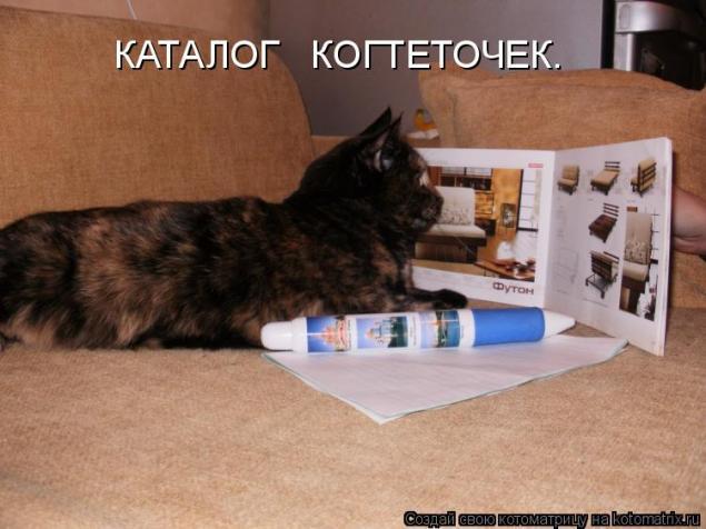 Кот дерет диван делать