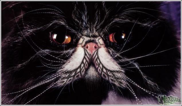 Зачем красить кошек?, фото № 28