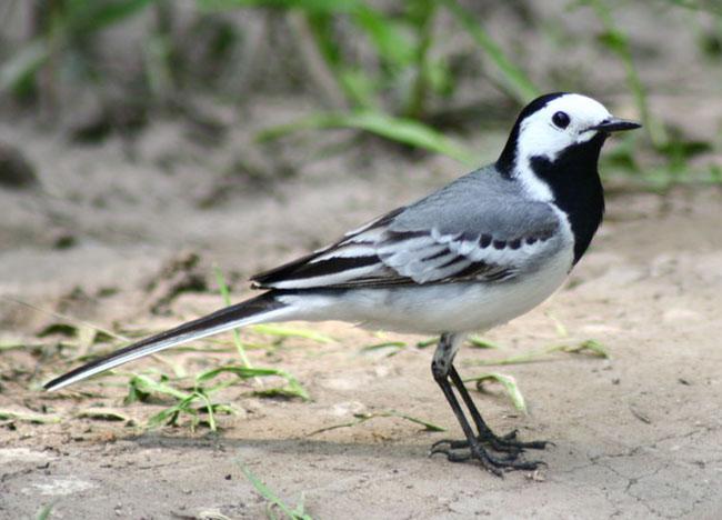 Каждой птице свой дом, фото № 16