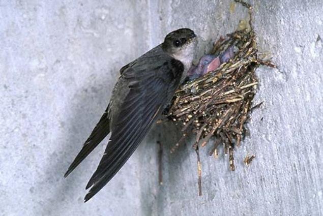 Каждой птице свой дом, фото № 17