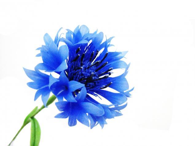 школа лепки цветов, мастер-класс по лепке