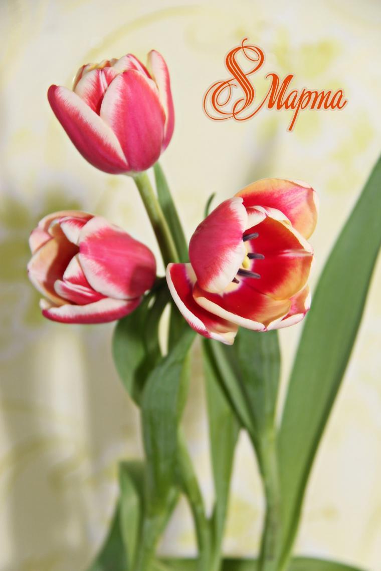 поздравление, 8 марта, женщина