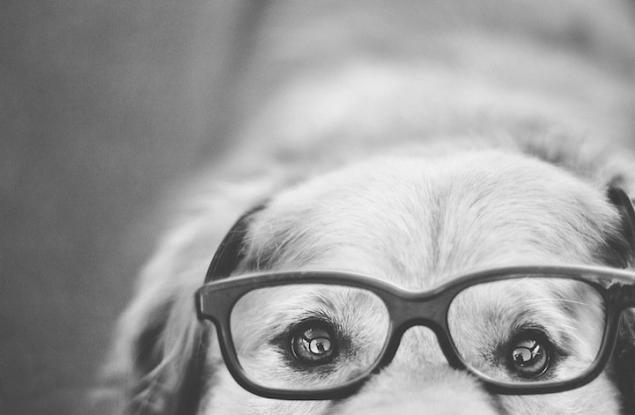 фото собак