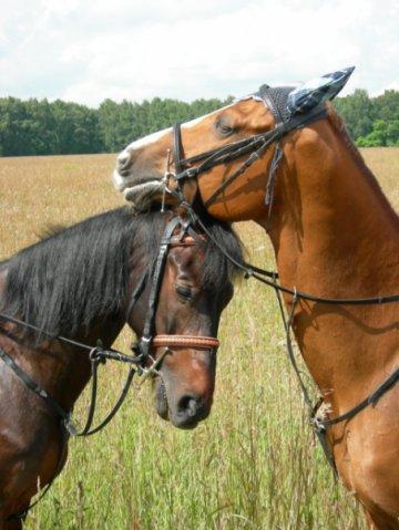 картина, акварели, лошадка, интерьерная картина