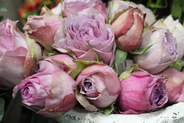 8 марта, фотографии цветов