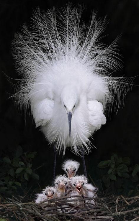 Птичий праздник <img src=