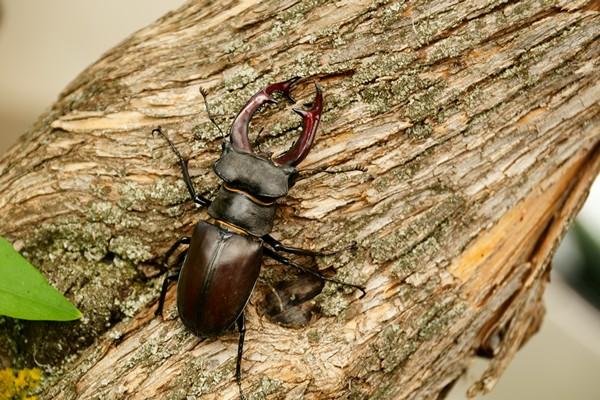 природа, насекомые
