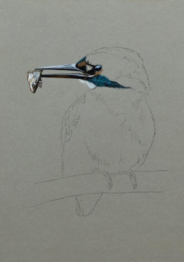 зимородок, блокнот, серия работ, птицы, серый