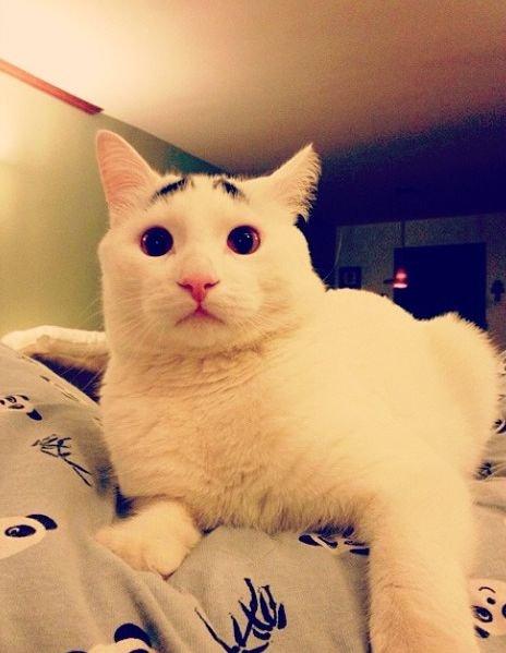 кот руперт