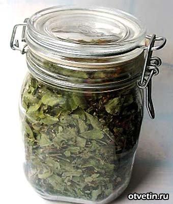 крапива, рецепты из крапивы, готовим из крапивы, трава крапива