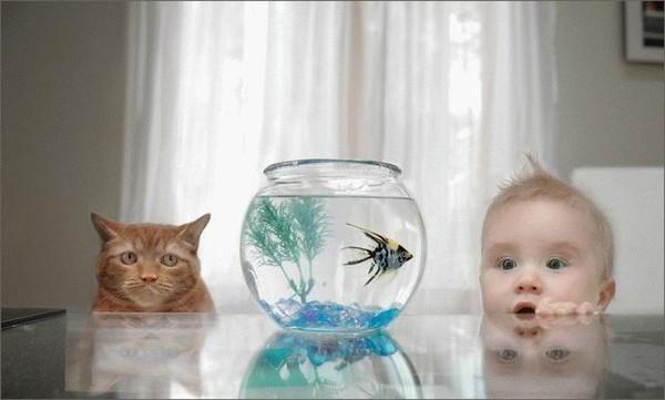картины, кошки, домашние, люди, акварель