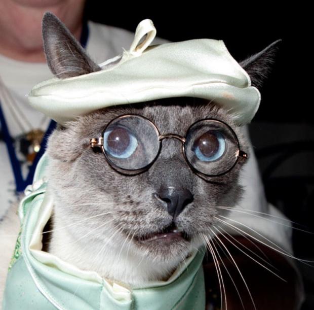 Картинка прикол кот шейх что толку в вышках, шоколадница своими руками