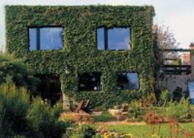 Идея вертикального озеленения на мой