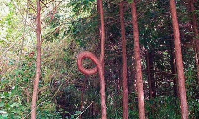 Странные и удивительные деревья